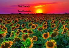 Tina's Sunflowers at Sunset